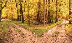 two roads in wood
